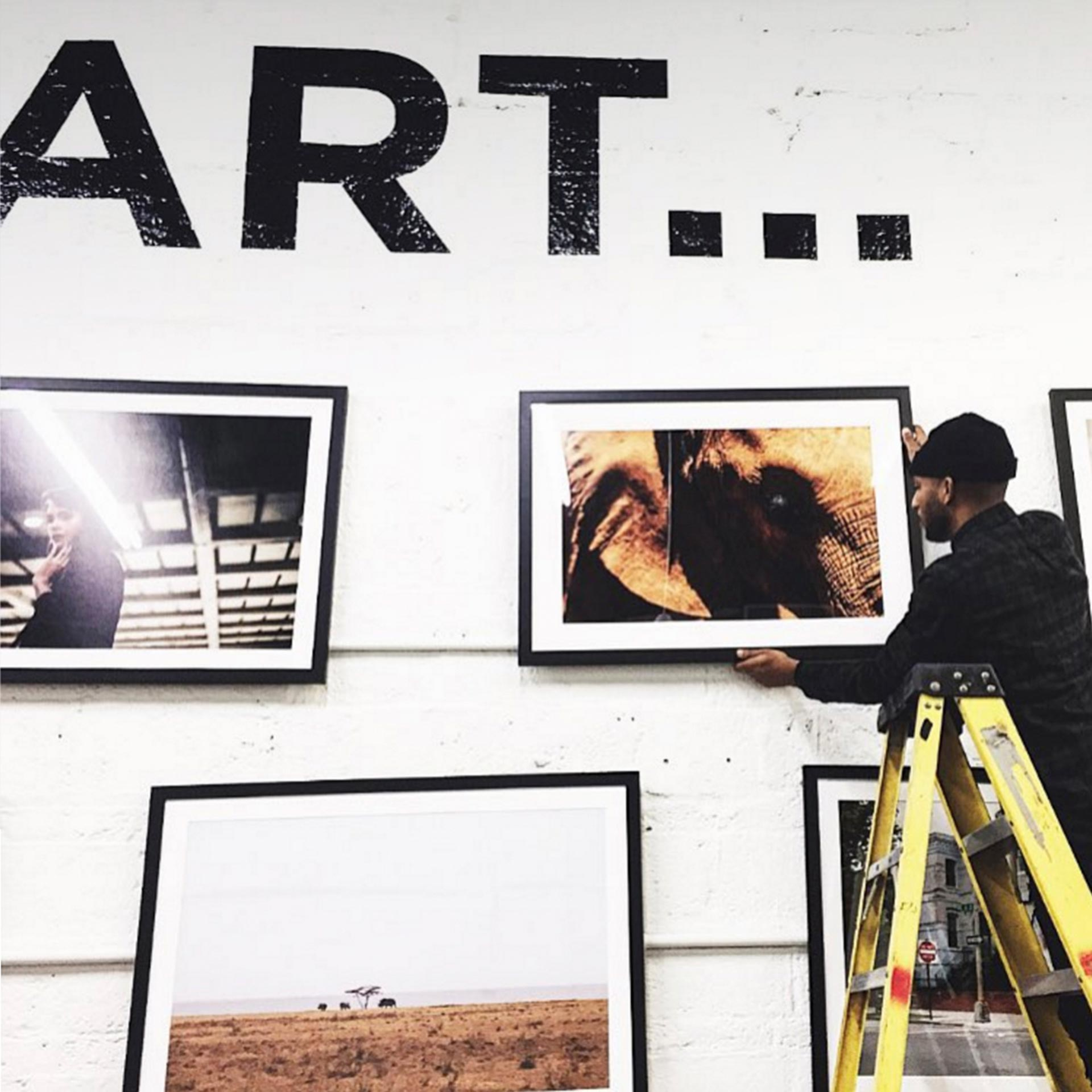 man hanging photograph of elephant on art gallery wall